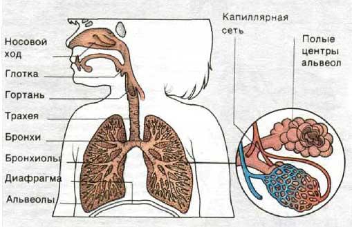 и лечение Коклюша,