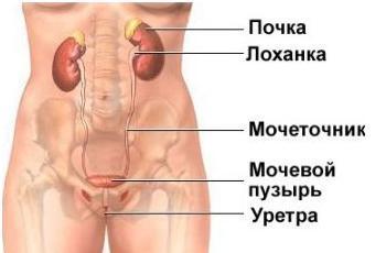 Лечение хондроза позвоночника народными средствами
