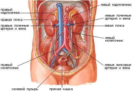 мужской органы фото